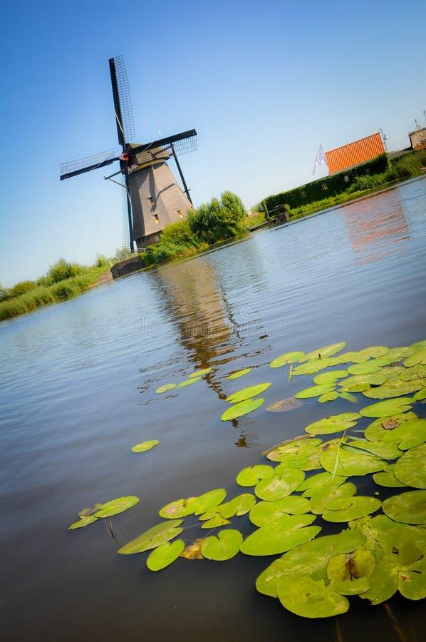 Molens en Waterlelies in Kinderdijk royalty-vrije stock afbeelding