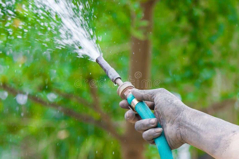 Molhando as árvores que bombeiam através do tubo de borracha fotos de stock royalty free
