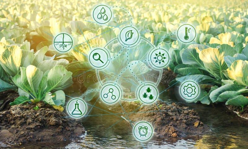 Molhar natural da agricultura De alta tecnologia e inovações na agroindústria Qualidade do estudo do solo e da colheita científic ilustração royalty free