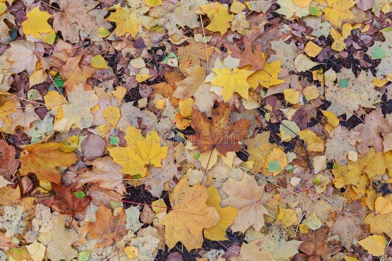 Molhe as folhas caídas underfoot com gotas da chuva imagens de stock