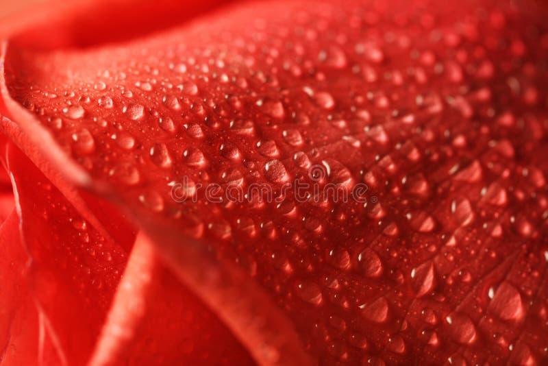 Molhe cor-de-rosa imagens de stock