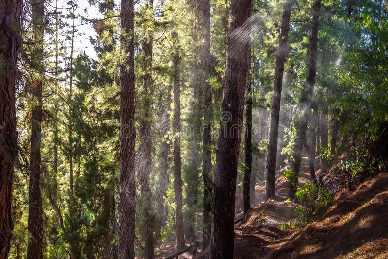 Molhe em uma floresta do pinheiro em Cerro de la Gloria no general San Martin Park - Mendoza, Argentina imagem de stock royalty free