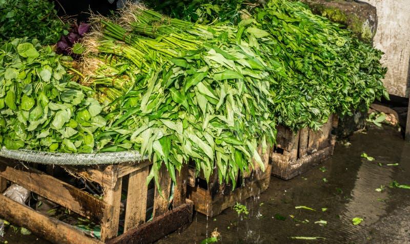 Molhe espinafres com gota da água no mercado tradicional bogor recolhido foto Indonésia imagens de stock royalty free