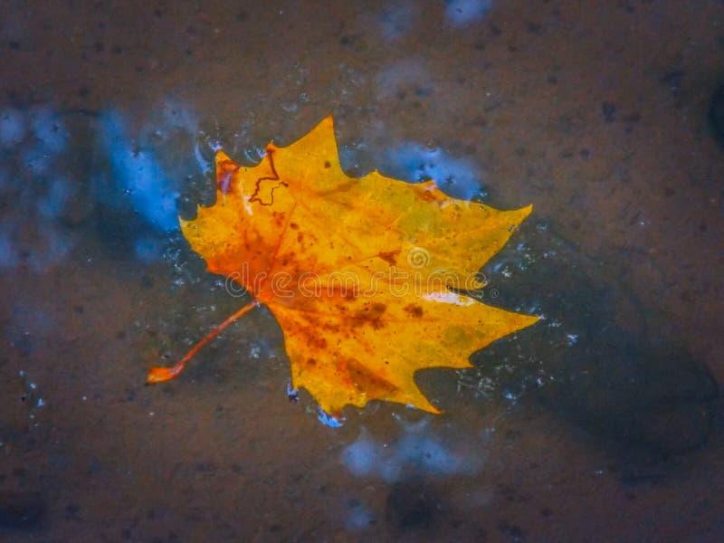 Molhe a folha caída do outono na água foto de stock