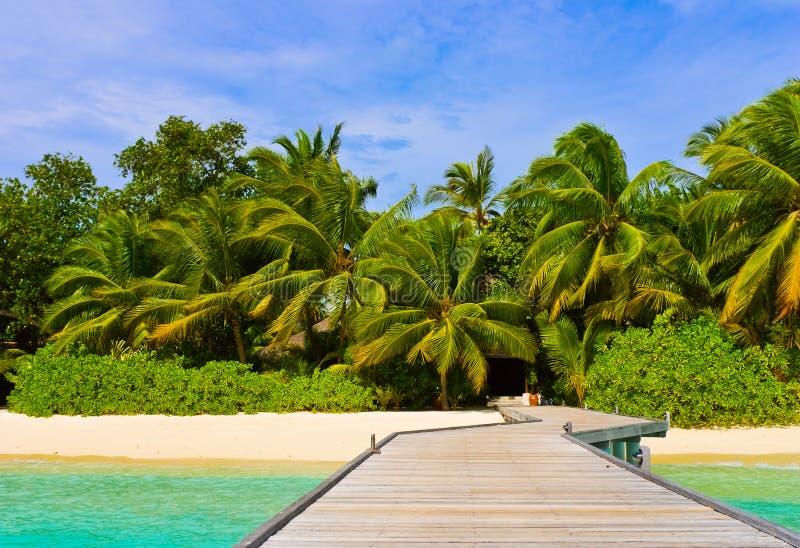 Molhe, praia e selva fotos de stock royalty free