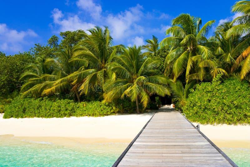Molhe, praia e selva fotos de stock
