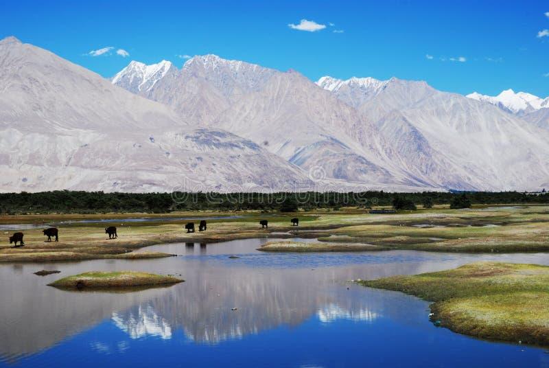 Molhe reflexões, vale de Nubra, Ladakh, India imagem de stock
