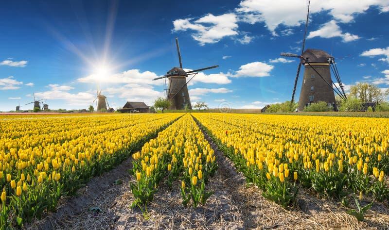 Molino de viento con el campo del tulipán en Holanda imágenes de archivo libres de regalías