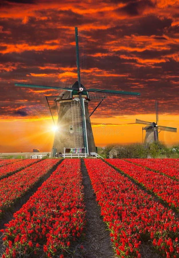 Molino de viento con el campo del tulipán en Holanda fotos de archivo