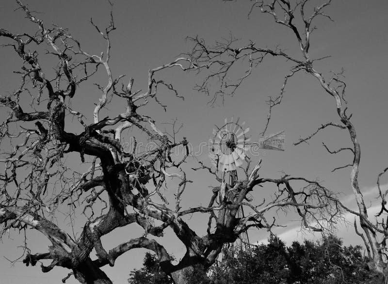 Molino de viento con los miembros de árbol muertos fotos de archivo libres de regalías