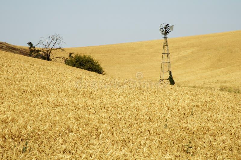 Molino de viento en un campo de trigo fotografía de archivo libre de regalías