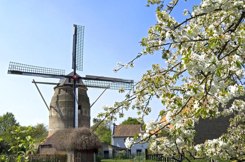 Molino de viento histórico Gronsveld y árbol del flor imágenes de archivo libres de regalías