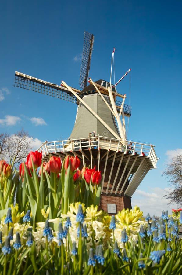 Molino de viento y tulipanes holandeses fotos de archivo