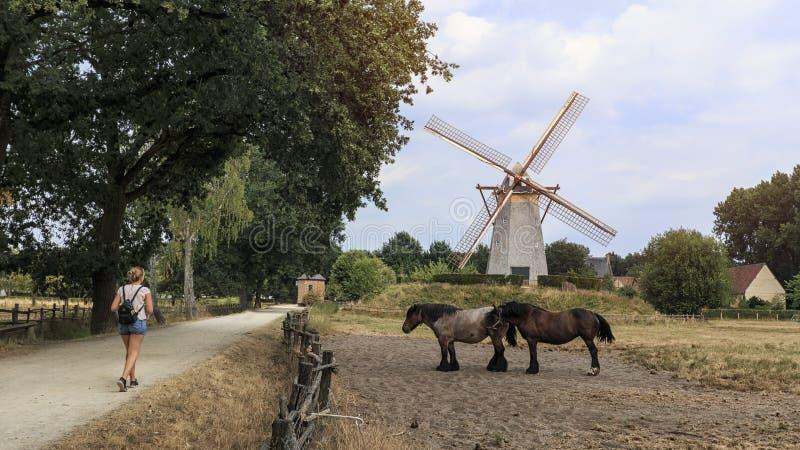 Molino viejo en Bokrijk, Bélgica foto de archivo
