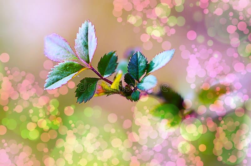 Molla all'aperto del giovane primo piano delle foglie verdi fotografia stock