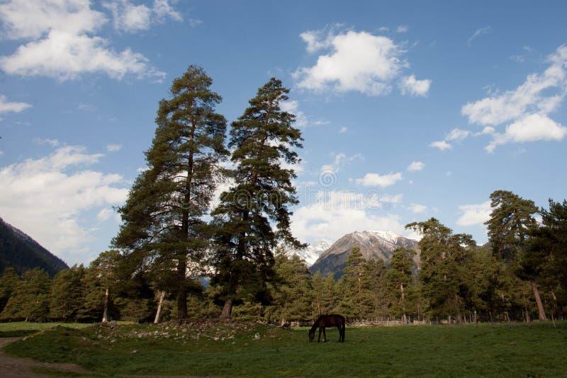 Molla in anticipo in montagne caucasiche immagini stock