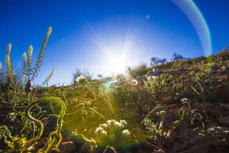 Molla del deserto fotografie stock libere da diritti