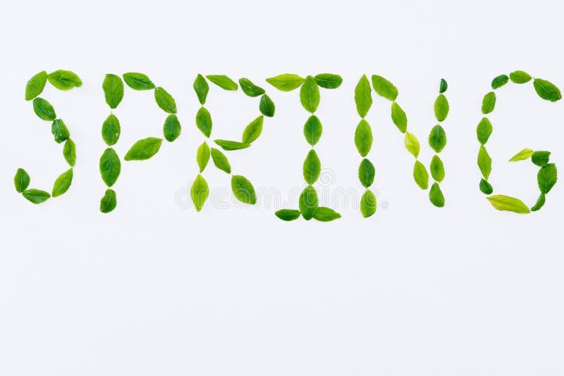 Molla dell'iscrizione con le foglie verdi su bianco immagine stock libera da diritti