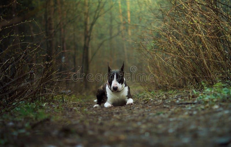 Molla della foresta del cane fotografia stock libera da diritti