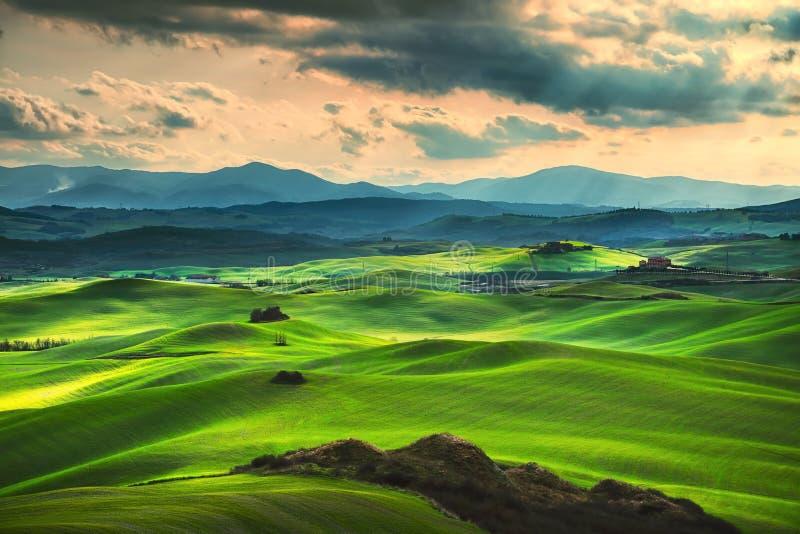 Molla della Toscana, Rolling Hills sul tramonto Paesaggio rurale Verde fotografie stock