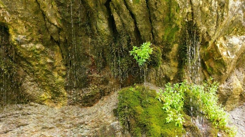 Molla di acqua in rocce muscose immagine stock