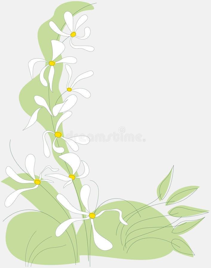 Molla di bianco del fiore fotografia stock libera da diritti