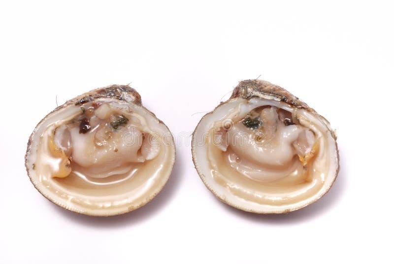 Molluschi immagine stock libera da diritti