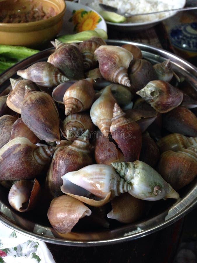 Molluschi bolliti fotografia stock libera da diritti