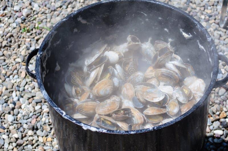 Molluschi cotti a vapore fotografia stock libera da diritti