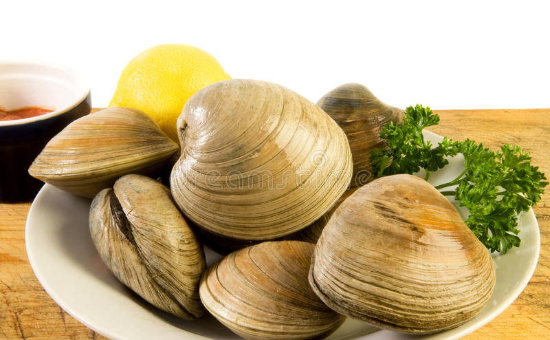 Molluschi di cherrystone freschi fotografia stock