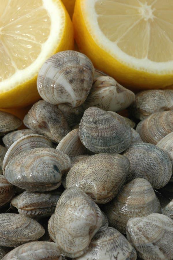 Molluschi e limoni fotografia stock libera da diritti