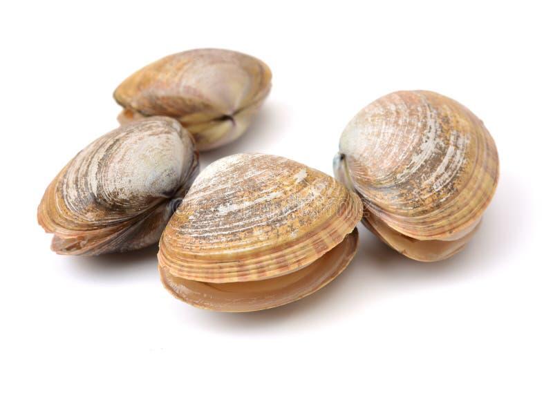 Molluschi freschi immagini stock libere da diritti