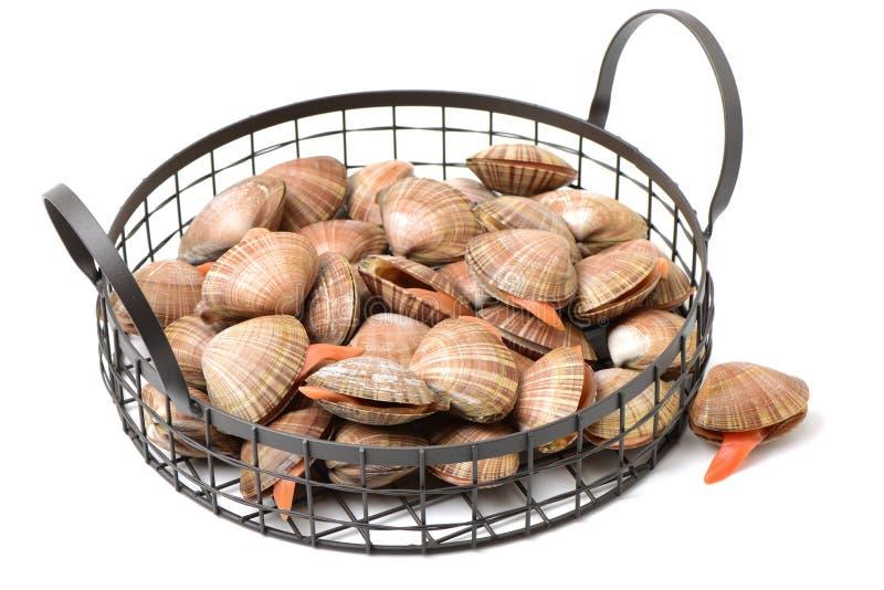 Molluschi freschi immagine stock