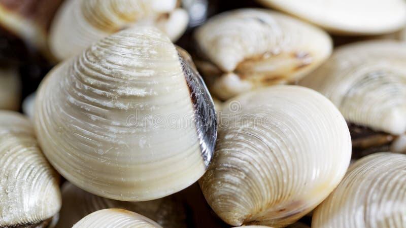 Molluschi freschi fotografia stock libera da diritti