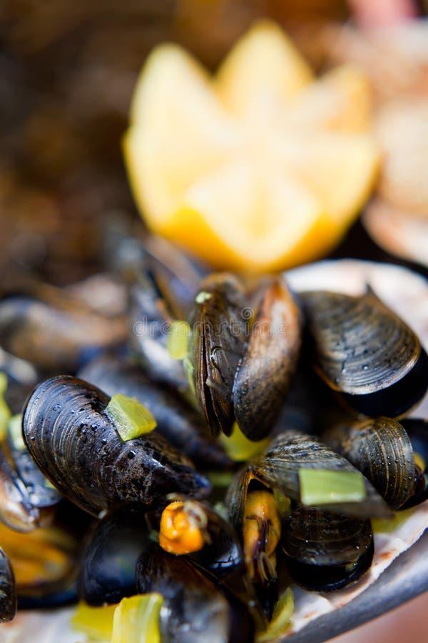 Molluschi freschi fotografie stock libere da diritti