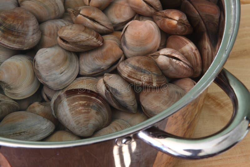Molluschi grezzi immagini stock libere da diritti