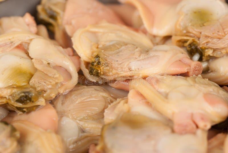 Molluschi rossi fotografia stock libera da diritti