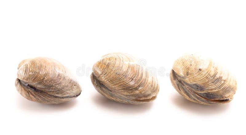 Molluschi su una priorit? bassa bianca fotografie stock