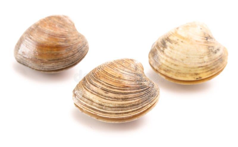 Molluschi su una priorit? bassa bianca fotografie stock libere da diritti