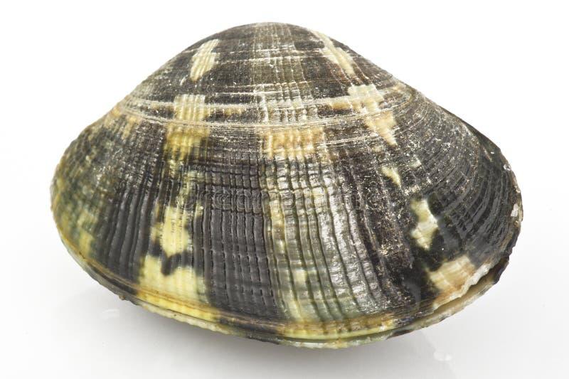 Molluschi in tensione immagini stock libere da diritti