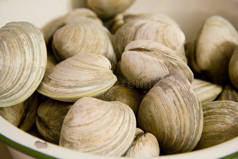 Molluschi in una ciotola immagine stock libera da diritti