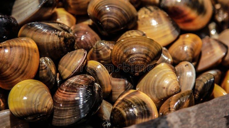 Mollusco brillante fotografia stock libera da diritti