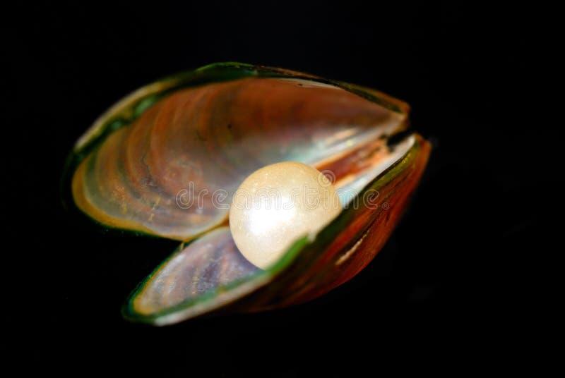 Mollusco della perla fotografia stock libera da diritti