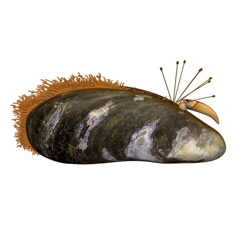 molluske stock abbildung