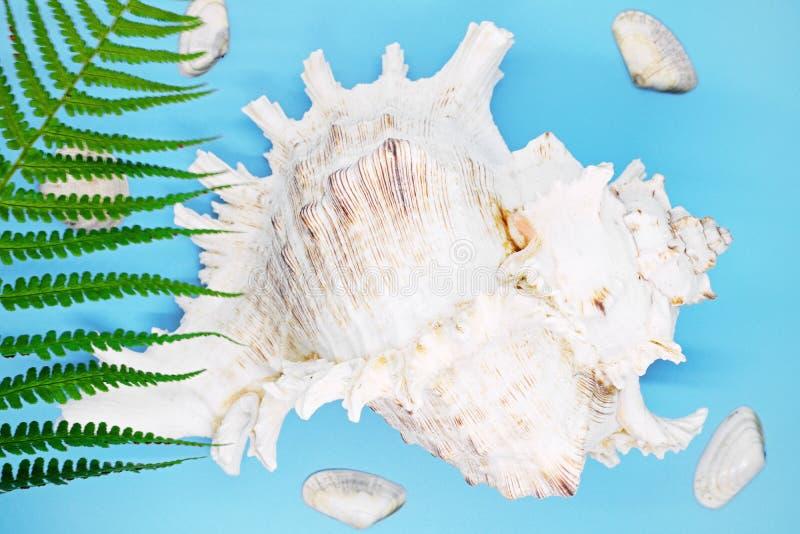 Molluskenoberteilnahaufnahme auf einem blauen Hintergrund, lizenzfreie stockfotografie