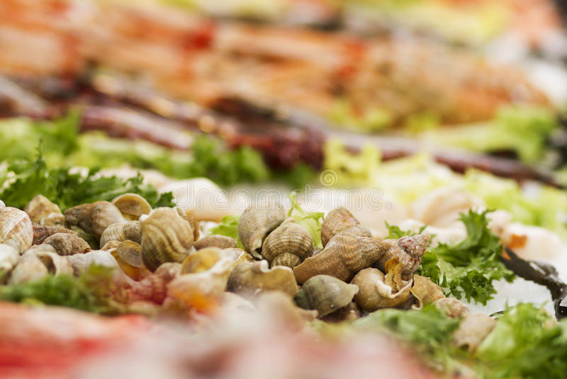 Mollusks on fish with salad. Closeup of edible mollusks on fresh fish garnished with salad stock image