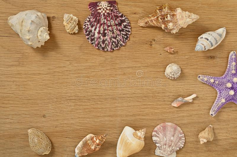 Mollusks on wooden table close up. Seashells on an old wooden table with copy space for text. Scallop shell from the black sea stock images