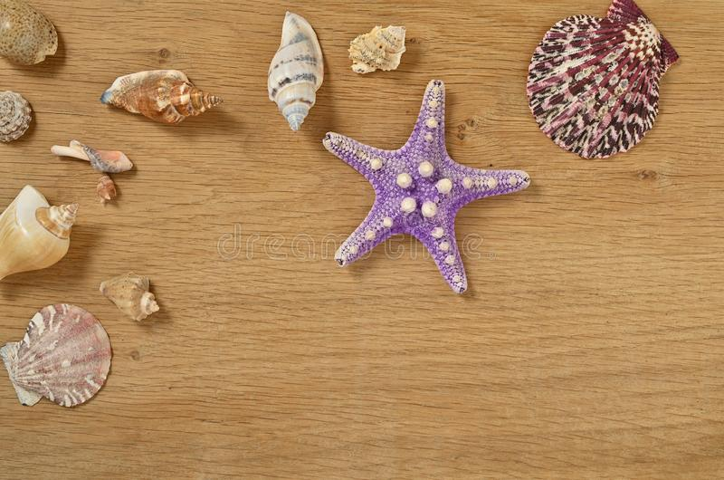 Mollusks on wooden table close up. Seashells on an old wooden table with copy space for text. Scallop shell from the black sea royalty free stock photos