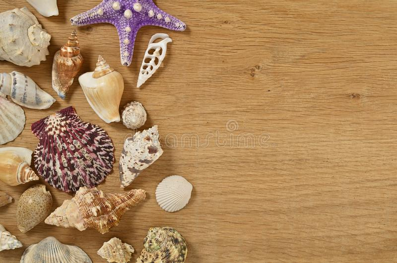 Mollusks on wooden table close up. Seashells on an old wooden table with copy space for text. Scallop shell from the black sea stock photography