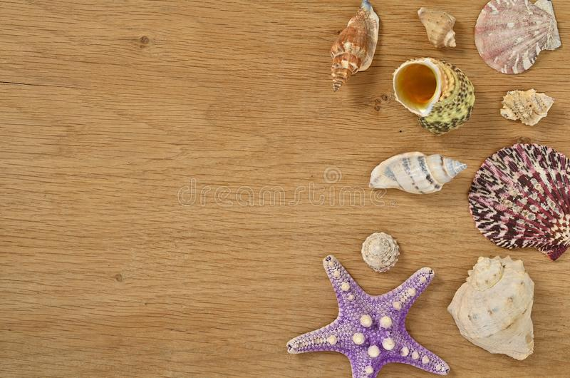 Mollusks on wooden table close up. Seashells on an old wooden table with copy space for text. Scallop shell from the black sea royalty free stock images